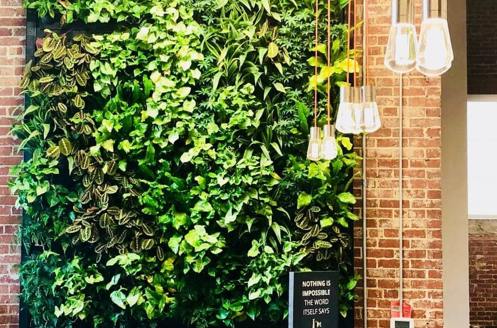 How to Go Green in Your Coworking Space
